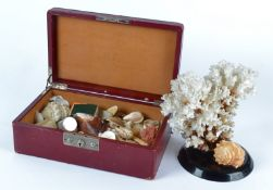 A small natural history enthusiast's shell collection contained in a Moroccan red leather case,