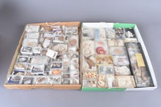 A wide-ranging collection of nautical shells, various species and sizes, all collected from