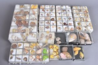 A large collection of land and sea snail shells, including Cuban Snail shells, of vibrant