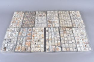 A very large collection of miniature shell specimens, in 23 trays and numerous boxes, covering