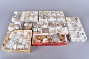 A variety of land and sea snail shells, comprising Cuban snail shells, with vibrant colouring,