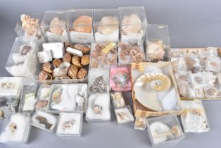 A mix of various-size shells, covering various species, discovered throughout the world, including
