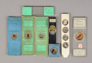 19th Century Microscope Slides, paper-covered, various sizes, bone slides, diamond-titled slide, and