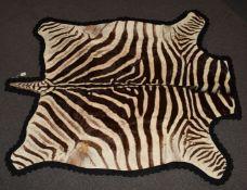 Burchell Zebra skin / taxidermy interest rug mounted on felt, with photocopy of Natal Parks Board