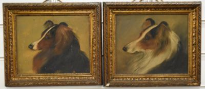 Pair of late 19th /early 20thC oil on board portraits of collies/shelties, 17 x 21cm, in gilt