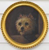 Oil on board of a terrier, diameter 25cm