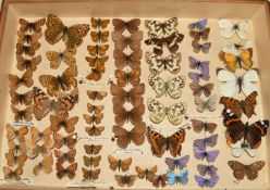 A collection of British butterflies