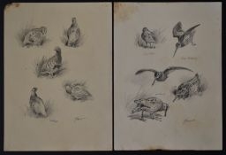 John Cyril Harrison (1898-1985) two pages of pencil drawings of birds comprising snipe, partridge