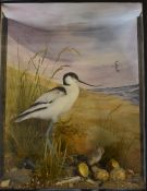 Taxidermy study of an avocet hatching chicks (replica eggs), in glazed case, taxidermist