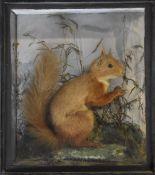 19thC taxidermy study of a red squirrel in glazed case, W27 x D11 x H30cm