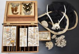 Natural History / taxidermy items including large collection of mounted butterflies, entomological