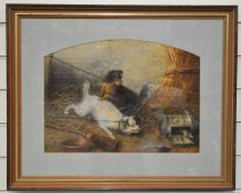 George Armfield (1808-1983) pair of chained terriers trying to catch a rat, 34 x 46cm
