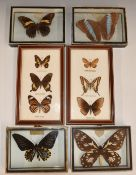 A collection of framed and mounted butterflies
