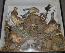 Late 19th/20thC taxidermy study to include Pheasant, Water Rail, Bullfinch, Chaffinch, Hedgehog,