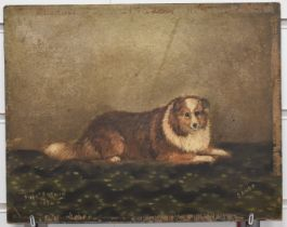Frederick French Victorian oil on board portrait of a dog 'Dando', signed and dated 1894 lower left,