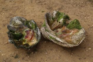 A near pair of giant clam shells