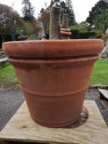 A single terracotta planter