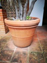 A pair of terracotta tapering cylindrical planters second