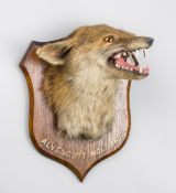 P. SPICER, A LATE 19TH CENTURY TAXIDERMY FOX MASK MOUNTED UPON AN OAK SHIELD. Inscribed: ALVESCOTT