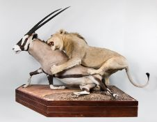 Entries Invited for Natural History, Taxidermy & Curiosities Auction