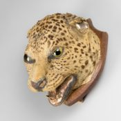 A 19TH CENTURY TAXIDERMY LEOPARD HEAD WITH SKULL UPON AN OAK SHIELD (h 30cm x w 22cm x d 24cm)