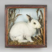 """HENRY PASHLEY OF CLEY-NEXT-THE-SEA, """"HORACE"""", A TAXIDERMY RABBIT IN A GLAZED CASE, CIRCA 1910."""