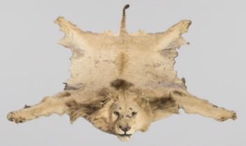 AN EARLY 20TH CENTURY TAXIDERMY LION SKIN RUG WITH MOUNTED HEAD. A letter of provenance 'The Lion,