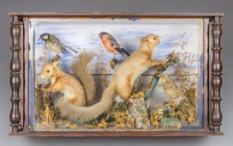 A 19TH CENTURY TAXIDERMY DIORAMA COMPRISING OF TWO RED SQUIRRELS AND THREE BRITISH GARDEN BIRDS,