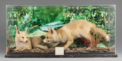 A 20TH CENTURY TAXIDERMY 'ARCTIC FOX CUBS' AT PLAY DIORAMA. The pair of fox cubs set within a