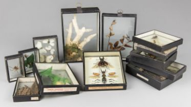 JAMES GARDNER OF LONDON, AN EARLY 20TH CENTURY ENTOMOLOGY COLLECTION ALONG WITH OTHER SPECIMENS.