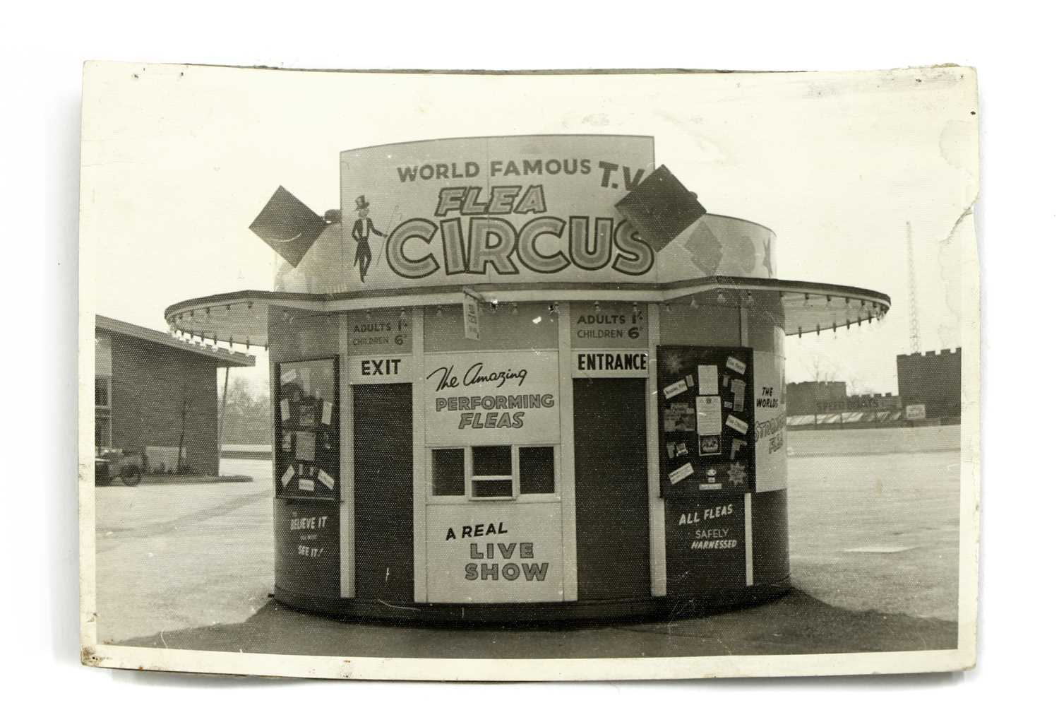 THE WORLD FAMOUS FLEA CIRCUS, - Image 7 of 8
