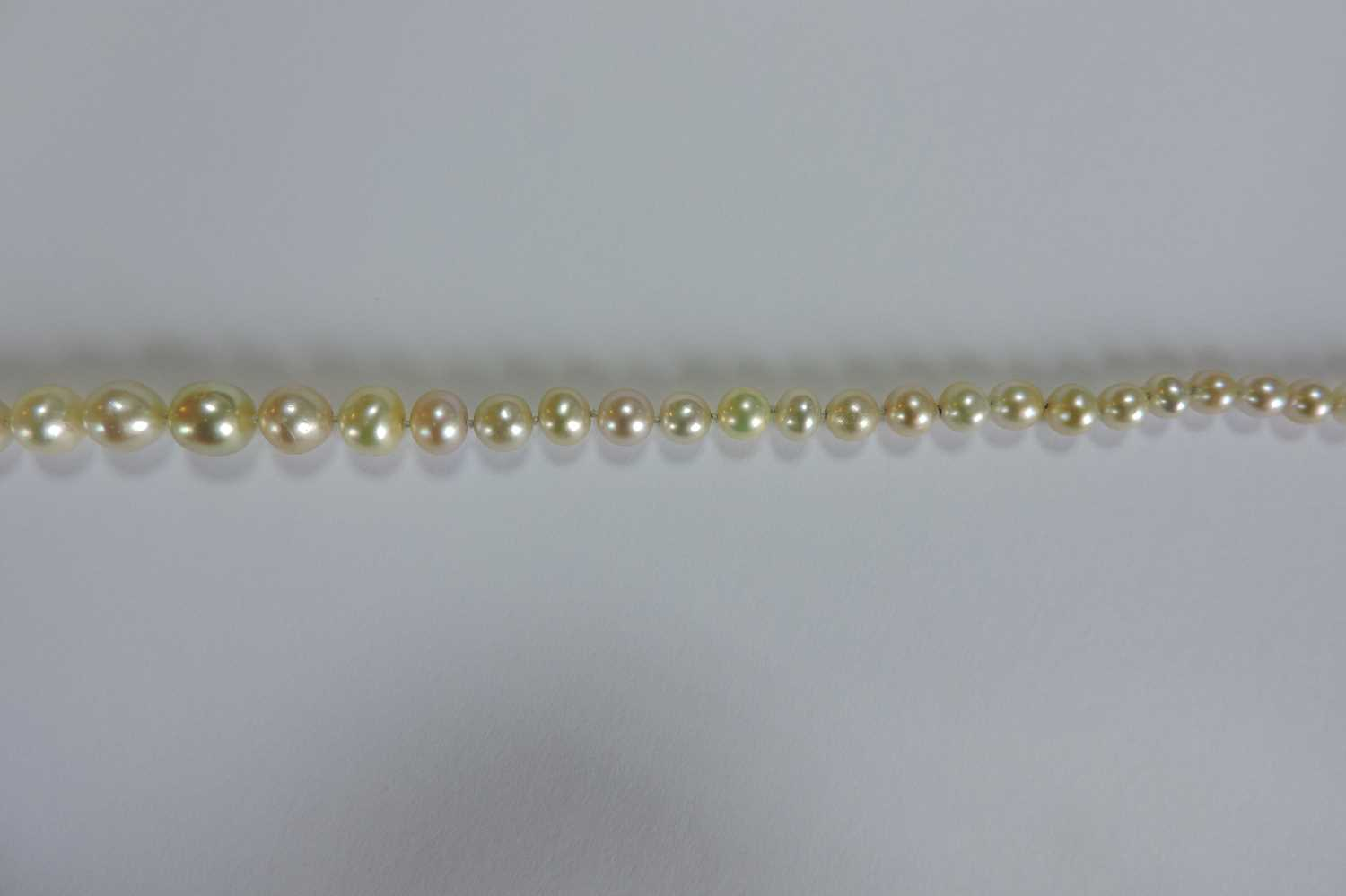 A single row graduated natural saltwater pearl necklace, - Image 12 of 12