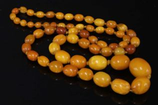 A single row graduated olive shaped amber bead necklace,