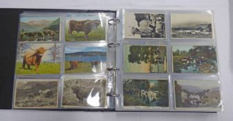 POSTCARD ALBUM OF VARIOUS ANIMALS AND BRITISH BIRDS TO INCLUDE HORSES, SHEEP, COWS, PIGS,