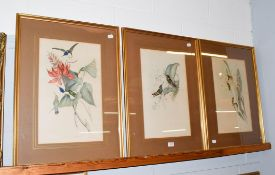 After John Gould, three hand-embellished ornithological prints, 50cm by 30.5cm (3)