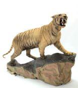Taxidermy: A Full Mount Bengal Tiger (Panthera tigris tigris), circa April 1901, Nepal, attributed