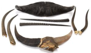 Antlers/Horns: A Collection of African Game Trophy Horns, circa 1930, South Africa, comprising a