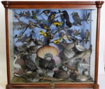 Taxidermy: A Large Cased Diorama of Birds & Reptiles Native to India, circa 1872, India, by Henry