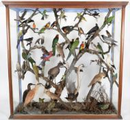 Taxidermy: A Large Cased Diorama of Birds Native to Australasia, circa 1872, Australia, attributed