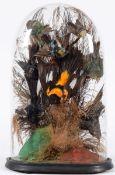 Taxidermy: A Victorian Diorama of Tropical Birds, circa 1880-1900, a collection of eight various