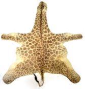 Hides/Skins: A Southern Giraffe Hide, circa late 20th century, a juvenile Southern Giraffe flat