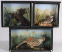 Taxidermy: Three Cased Animal & Birds, circa late 20th century, comprising - a cased adult Cheer