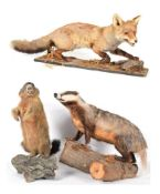 Taxidermy: A Group of European Countryside Animals, circa late 20th century, comprising - full mount