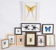 Entomology: A Collection of Various Insects, modern, comprising - two Leaf Insect's, Harlequin