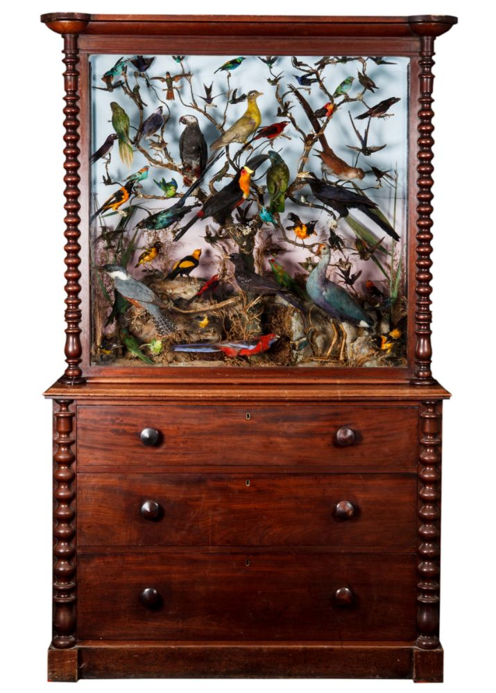 Natural History & Taxidermy - Online Auction