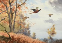 John Cyril Harrison (1898-1985) Pheasants breaking cover Signed, watercolour, 32.5cm by 46.5cm
