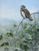 George Edward Lodge (1860-1954) ''Hawfinch'' Signed and dated 1950, gouache, 28.5cm by 22cm