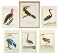 After François-Nicolas Martinet (1731-1800) French Bird Studies from 'Histoire Naturelle des