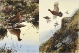 Rodger McPhail (b.1953) Covey of Grouse in flight Grouse in contemplation Signed, watercolour