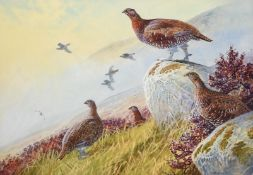 Peter Allis (b.1944) Covey of Grouse in a moorland landscape Signed, watercolour, 51cm by 73cm